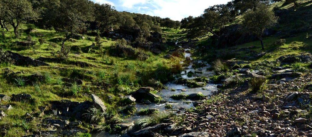 Monfraguelandscape-rutas-4x4-senderismo-monfrague-turismorural-turismo natural- ecoturismo-naturaleza-monfrague-extremadura-birdwatching-logo 014