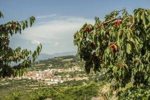 Qué ver en Villareal de San Carlos